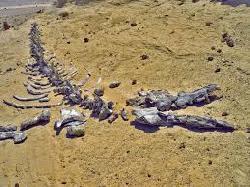Donde esta ubicado el monte Sinai? Descargar gratis libro Un unico Dios