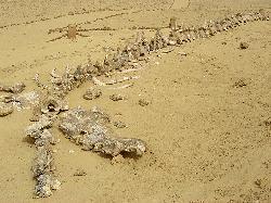 Wadi Al Hitan Descargar gratis libro Un unico Dios